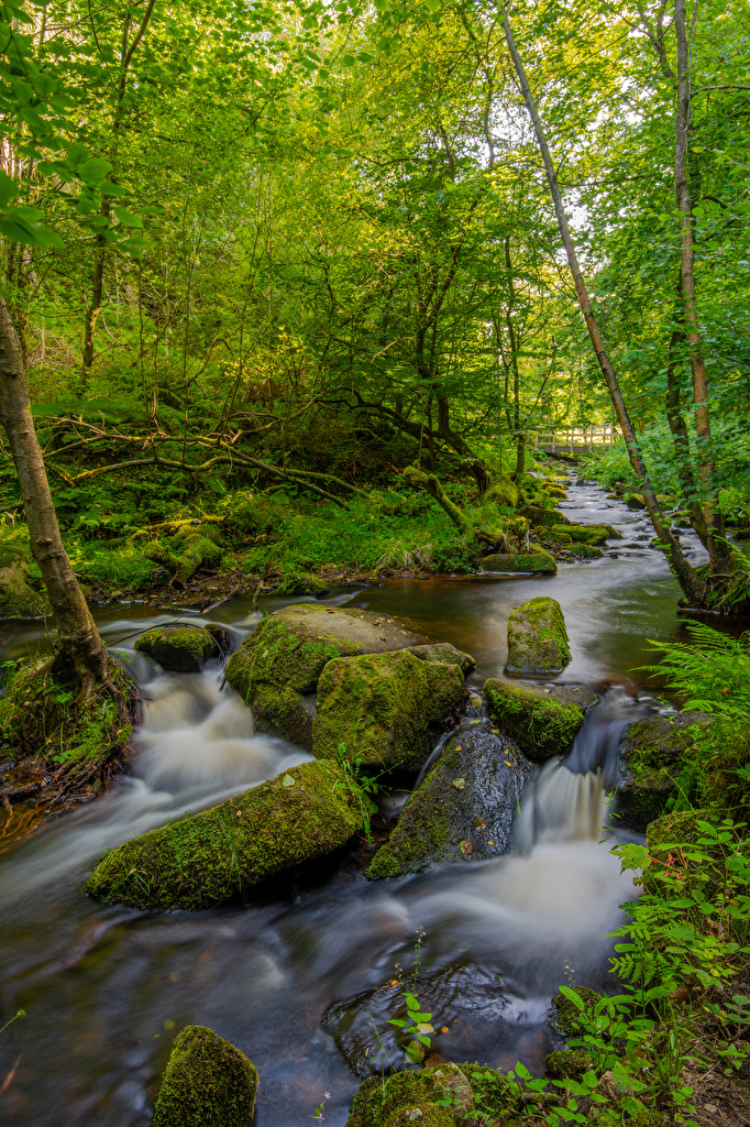 Bilder von England Peak District Natur Bäche Wälder Stein Laubmoose Bäume  für Handy Bach Wald Steine