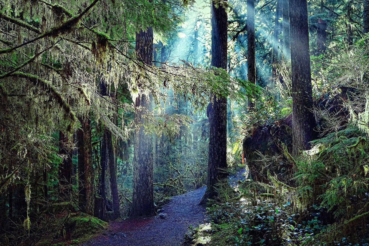Afbeeldingen Natuur smalle weg Bossen Een boom Pad weg bos Bomen