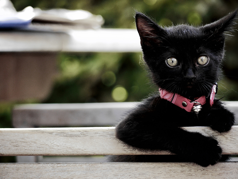 Immagine Gattini Nero Animali Colpo d'occhio Sguardo animale