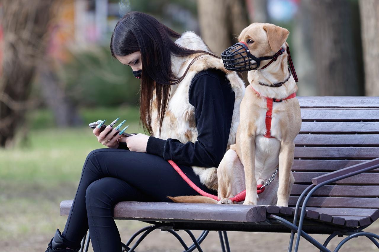 Fotos Hunde Coronavirus Brünette Zwei Maske sitzt Bank (Möbel) ein Tier hund 2 Masken sitzen Sitzend Tiere