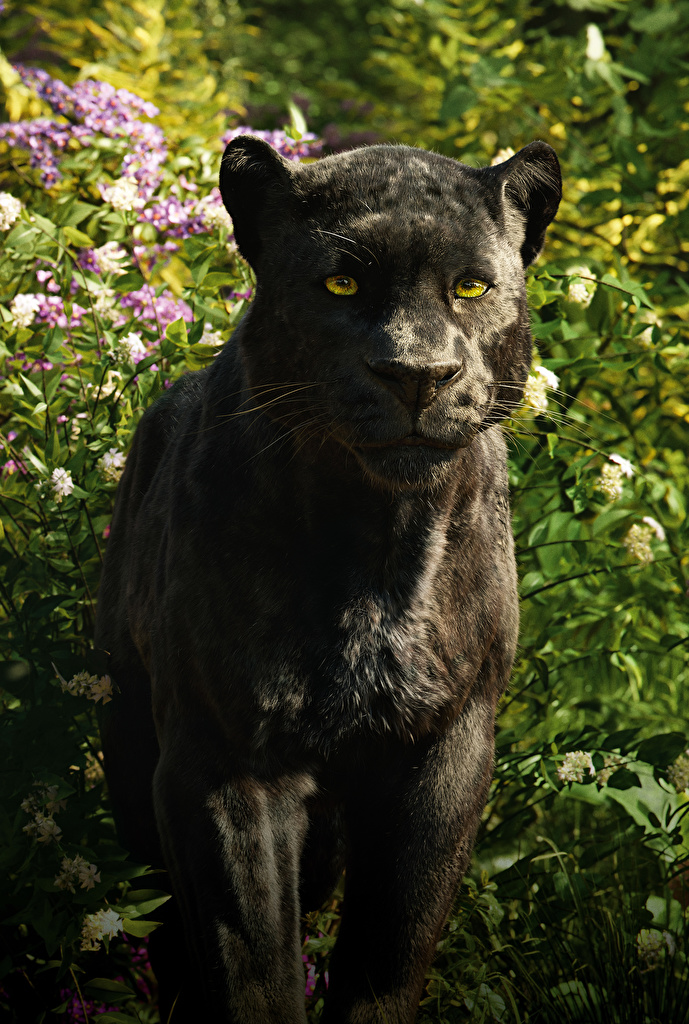 Fondos de Pantalla Pantera negra El libro de la selva 2016