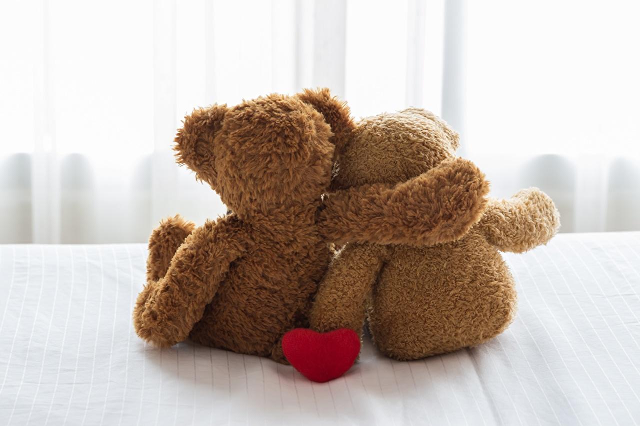 Foto Valentinstag Zwei Umarmung Teddybär Hinten 2 umarmt umarmen Teddy Knuddelbär
