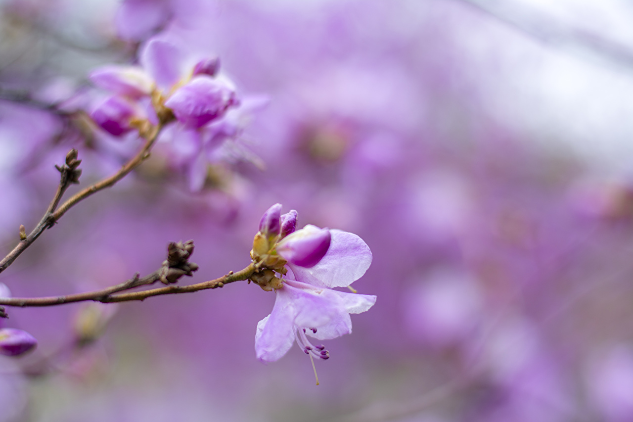 La floraison des arbres Branche Bourgeon fleur Fleurs