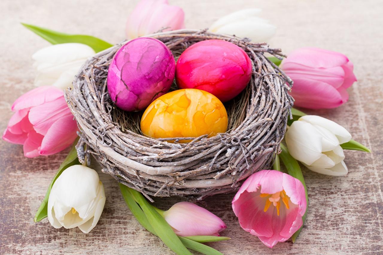 Wallpaper Easter egg Nest Tulips Flowers Eggs tulip flower