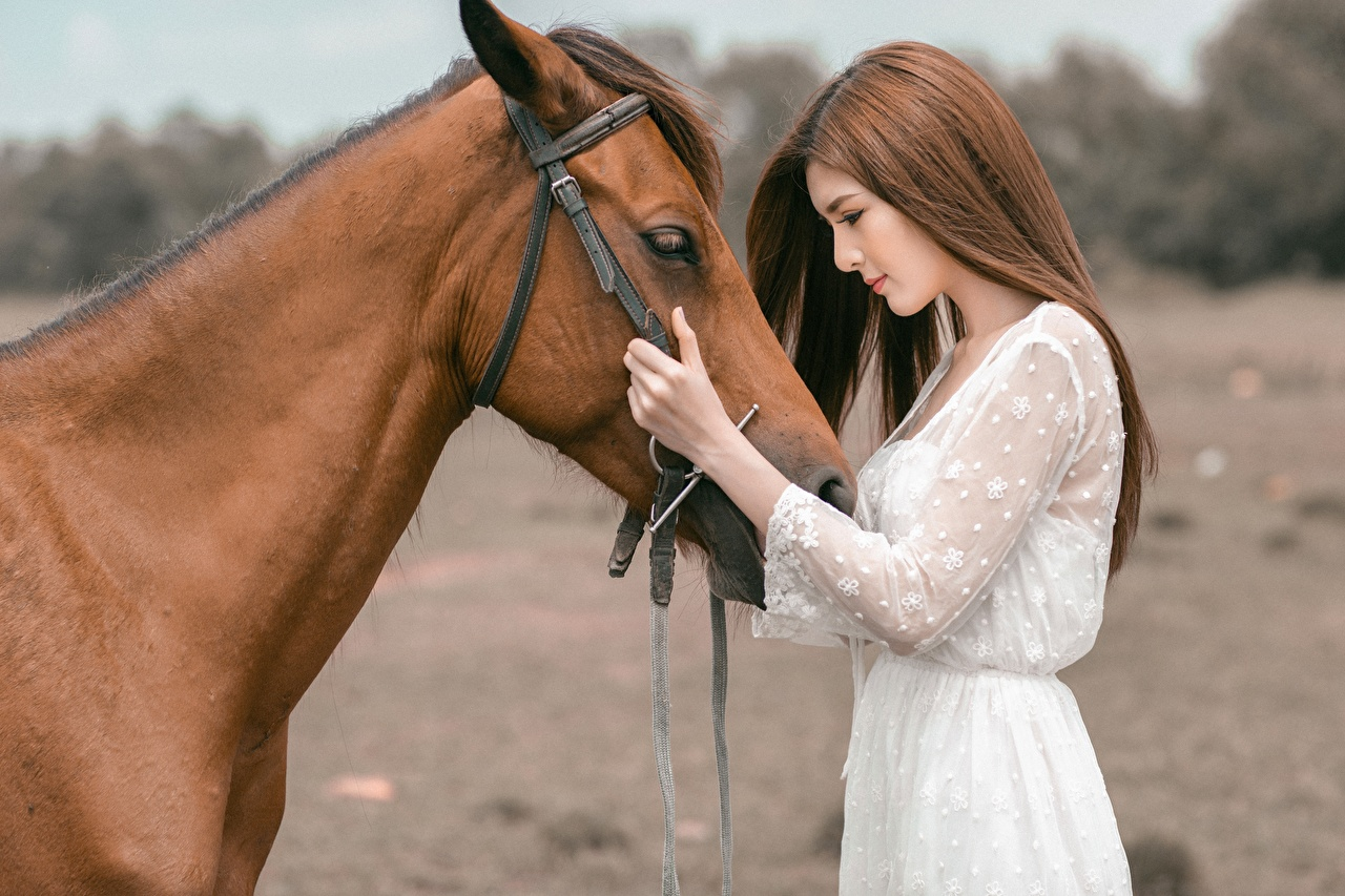 Pictures Horses Brown haired Girls Asian Asiatic