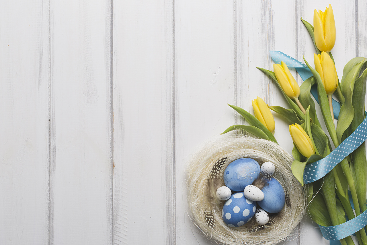 Pictures Easter egg Nest Tulips flower Feathers Ribbon boards Eggs tulip Flowers Wood planks