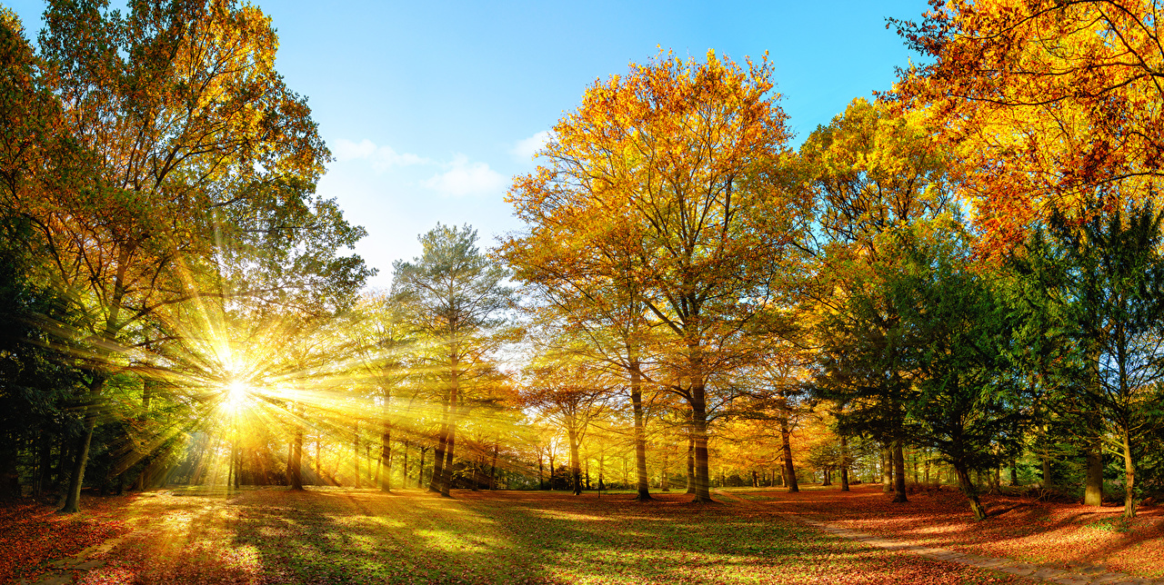 bilder von lichtstrahl natur herbst bäume jahreszeiten
