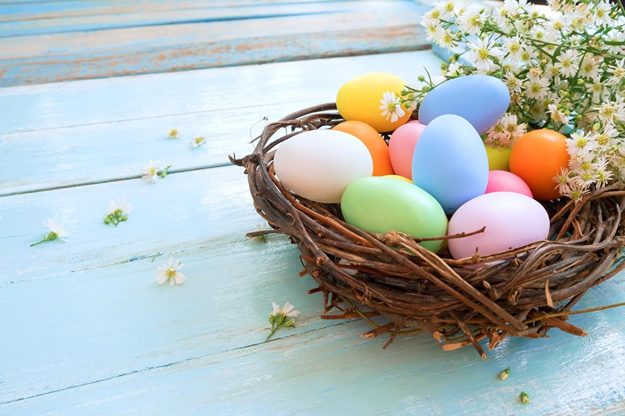 Picture Easter Multicolor egg Nest Eggs