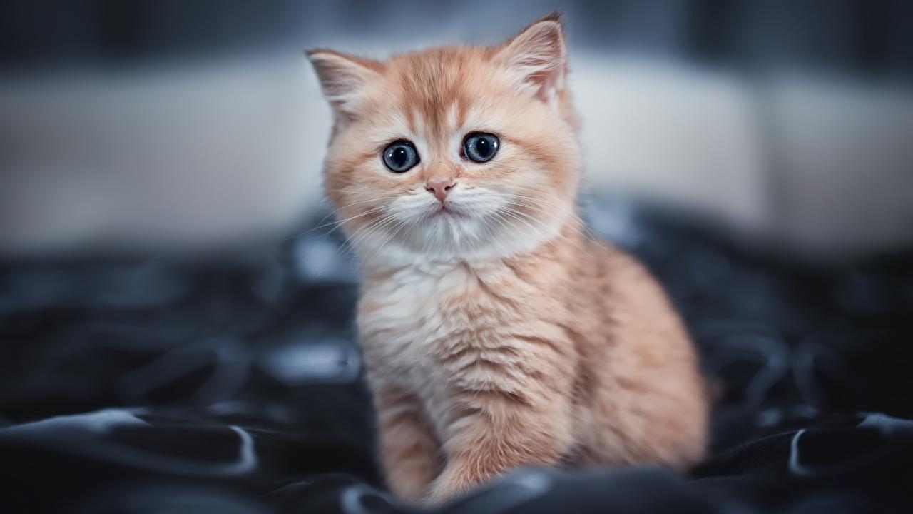 Fotos von Kätzchen Katzen unscharfer Hintergrund süße Tiere Blick Katzenjunges Katze Hauskatze Bokeh nett Süß süßer süßes niedlich Starren ein Tier