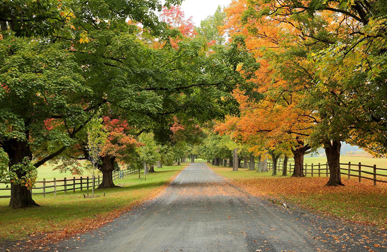 Photos Autumn Nature Roads Trees