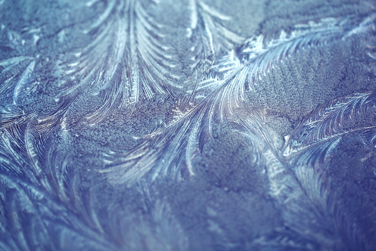Images ornament Frost Nature Closeup Tracery