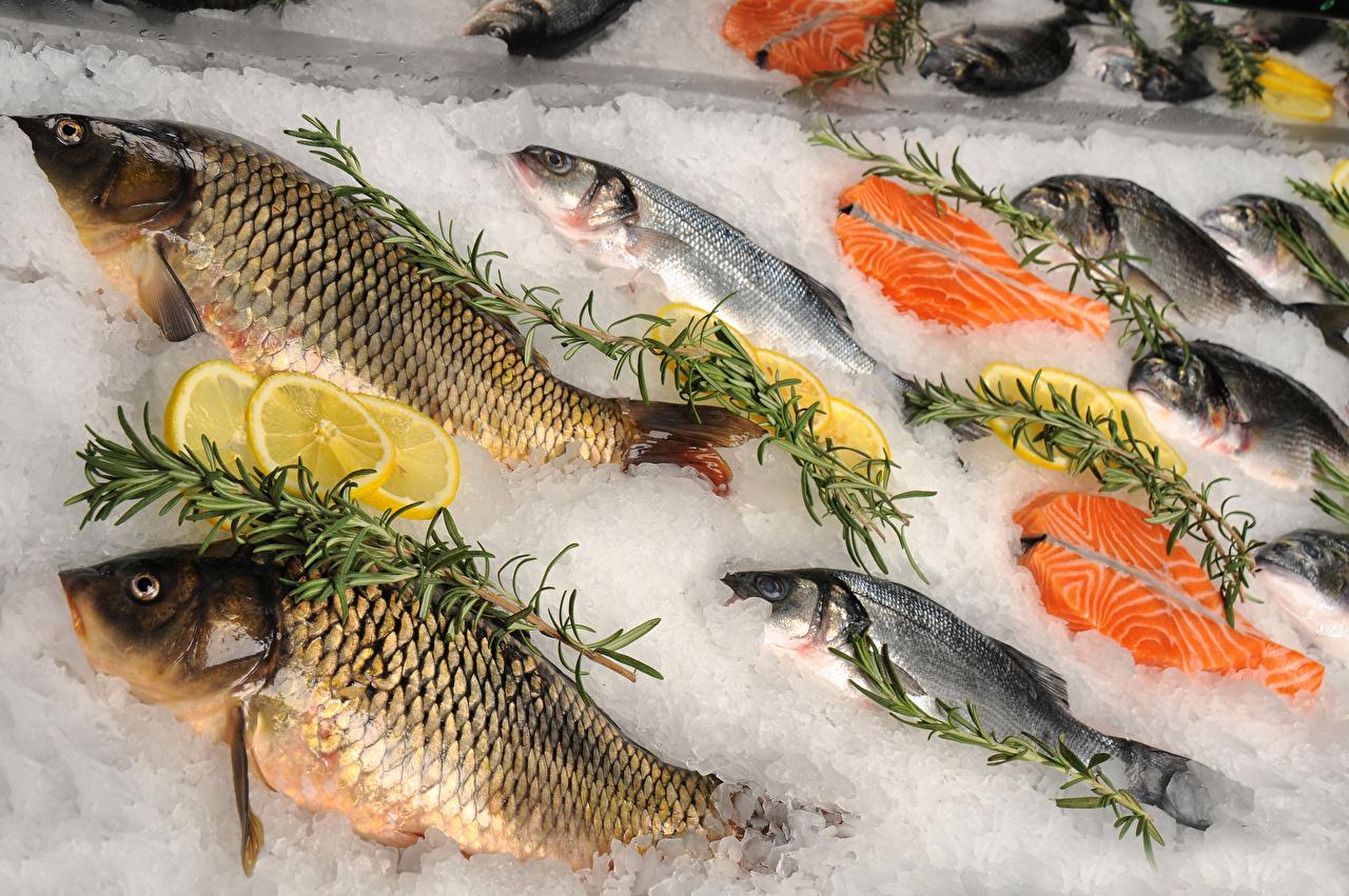 Immagini Il ghiaccio Pesce - Cibo Cibo pesci alimento