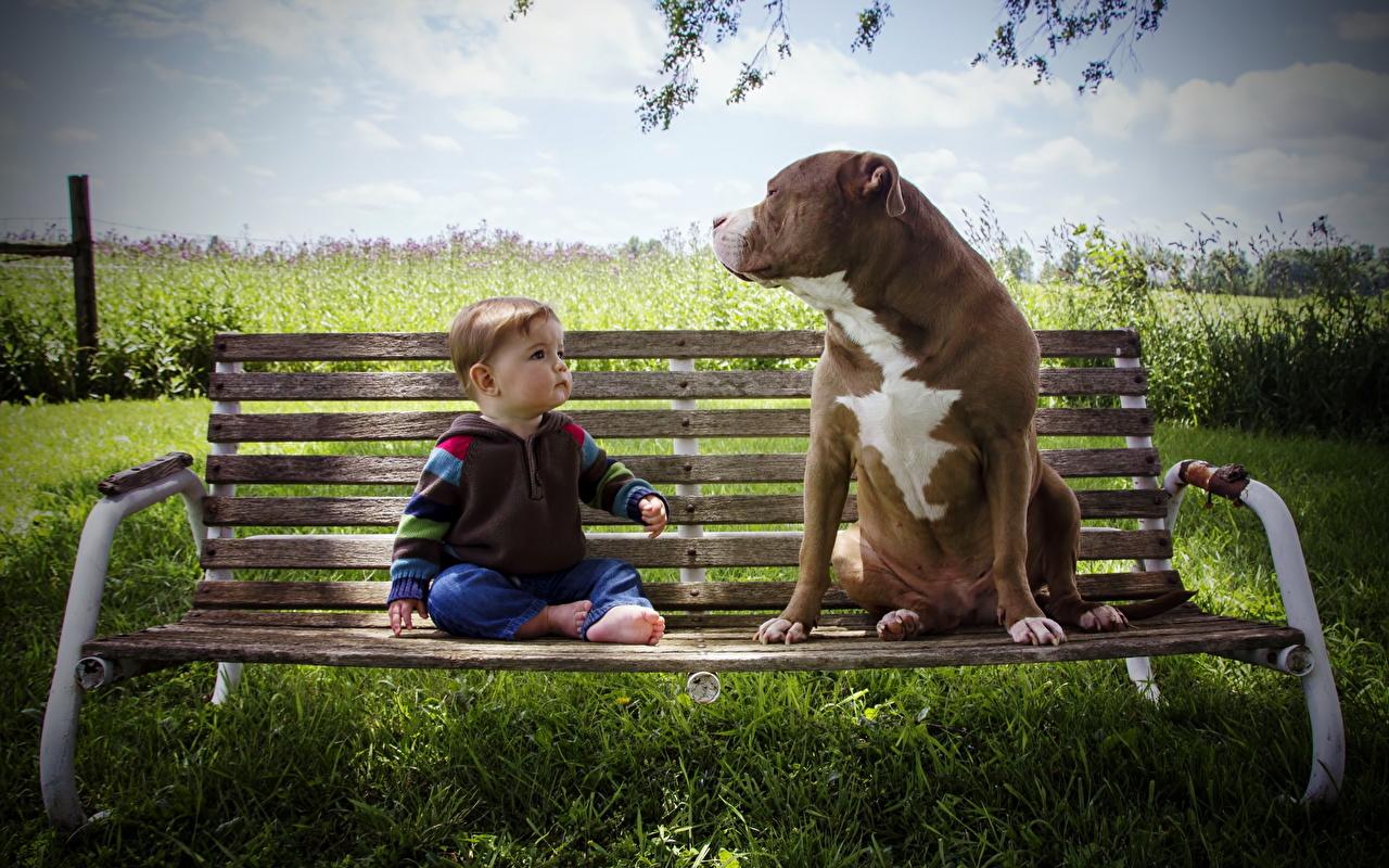 Desktop Wallpapers dog Boys child Bench animal Dogs Children Animals