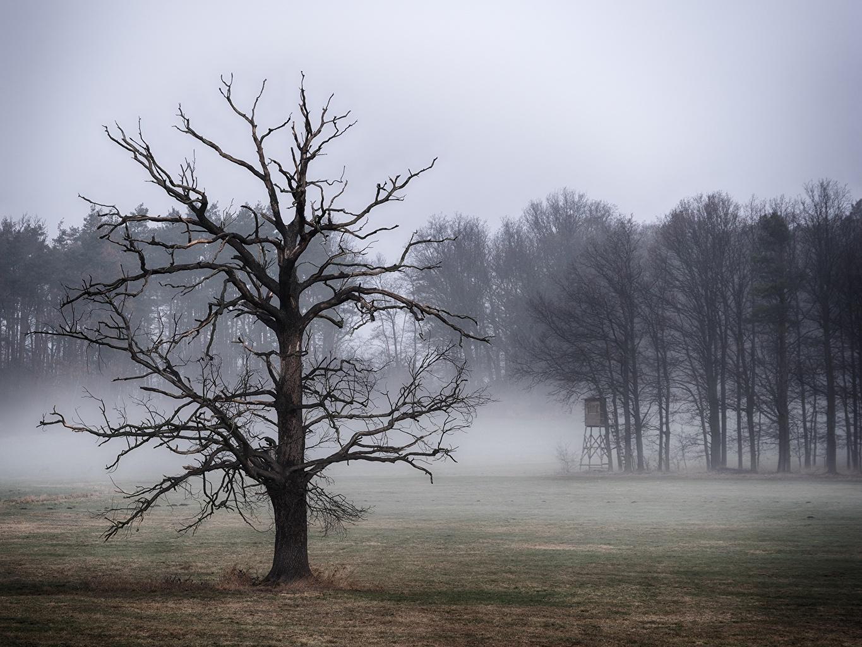 壁紙 木 霧 枝 自然 ダウンロード 写真