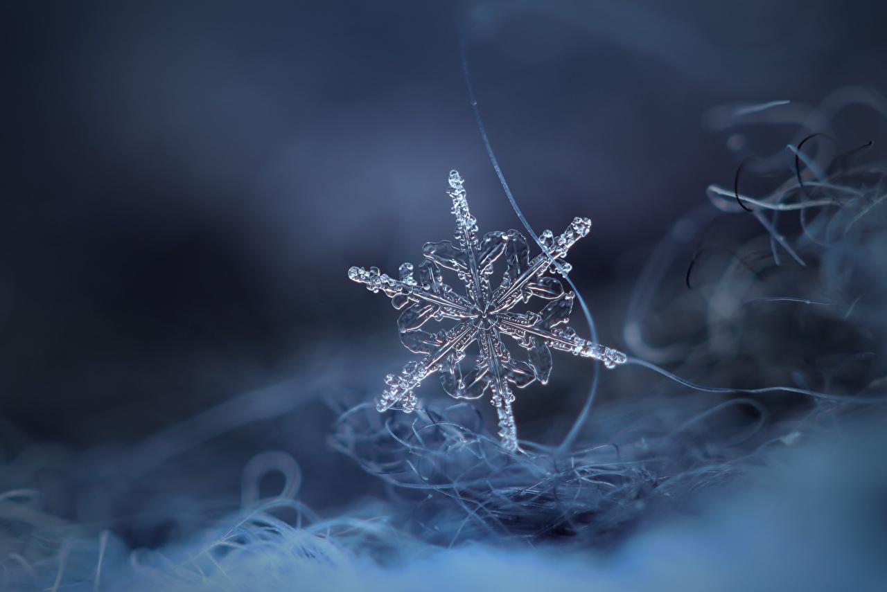 Foto Eis Schneeflocken Nahaufnahme hautnah Großansicht