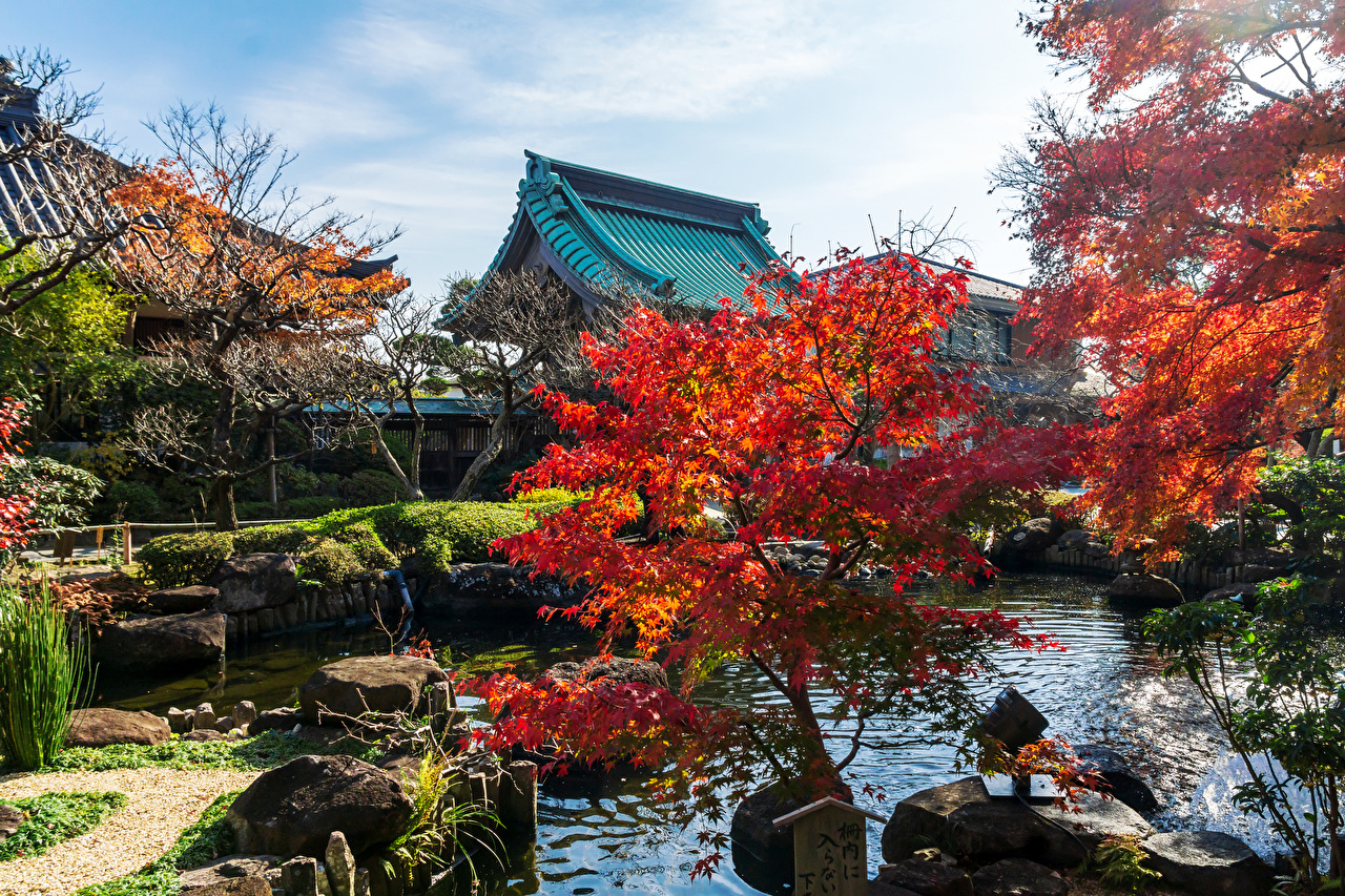 Images Japan Kamakura Autumn Pond temple Trees Cities Temples