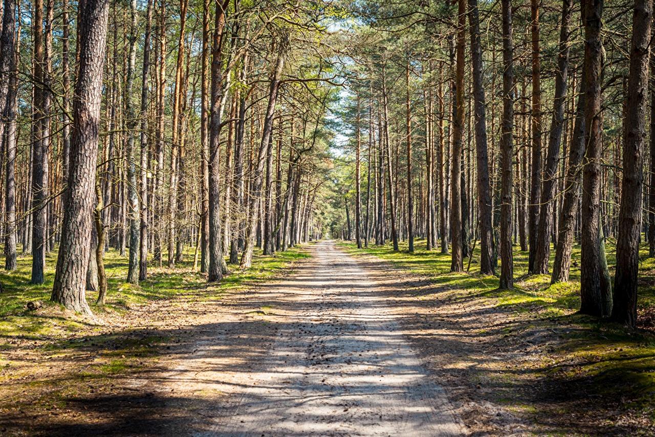 Bilder von Natur Wege Wald Bäume Straße Wälder