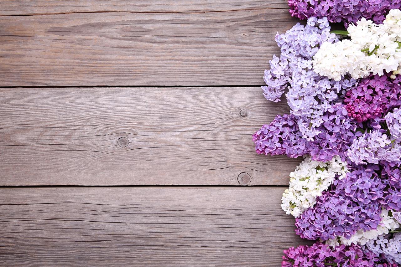 Fotos von Blüte Syringa Vorlage Grußkarte Bretter Blumen Flieder