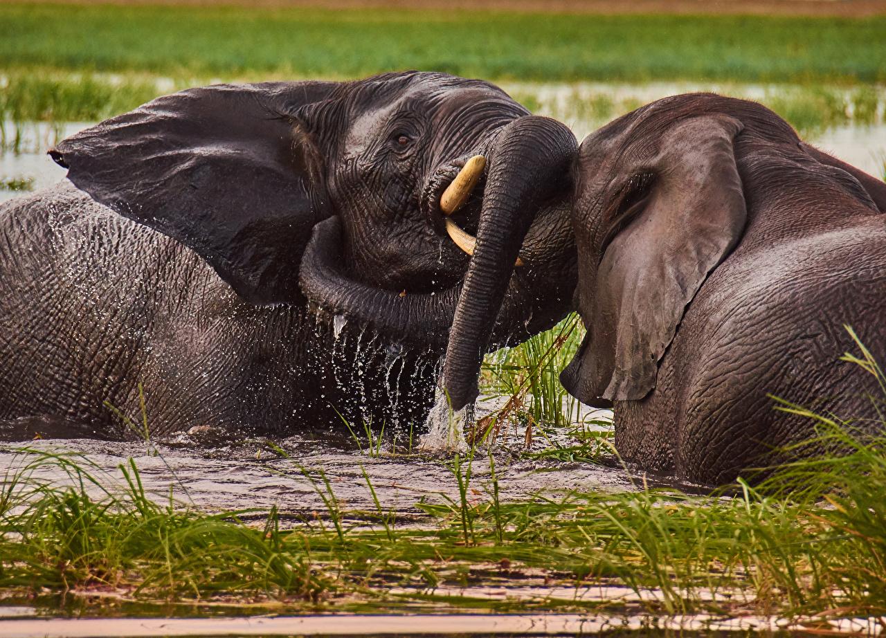 Foto Elefanten 2 Schlägerei Wasser Tiere Zwei