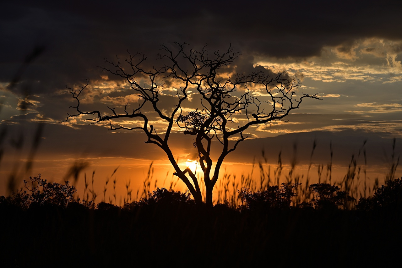 Image silhouettes Tanzania Nature Sunrises and sunsets Evening Branches Trees Clouds Silhouette sunrise and sunset