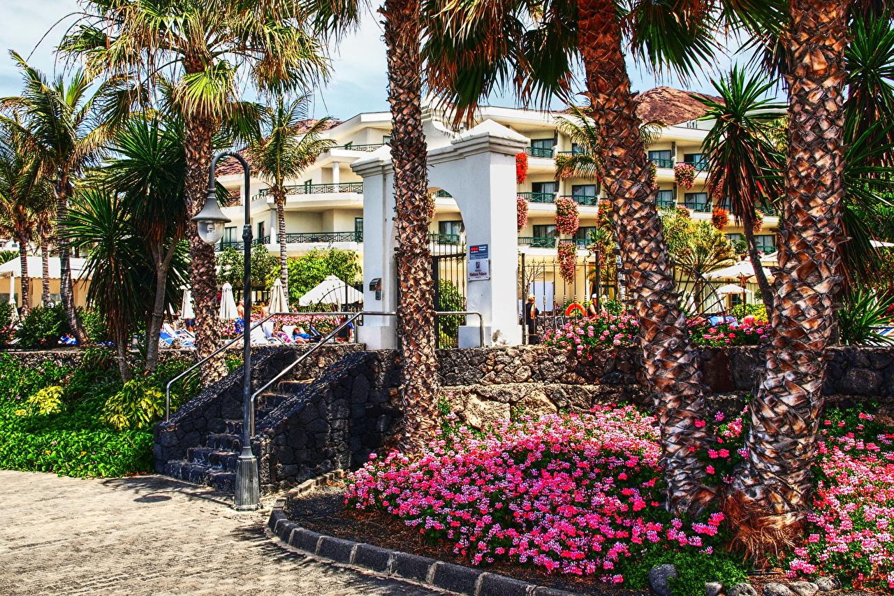 、スペイン、住宅、Playa Blanca、カナリア諸島、ヤシ、建物、都市、