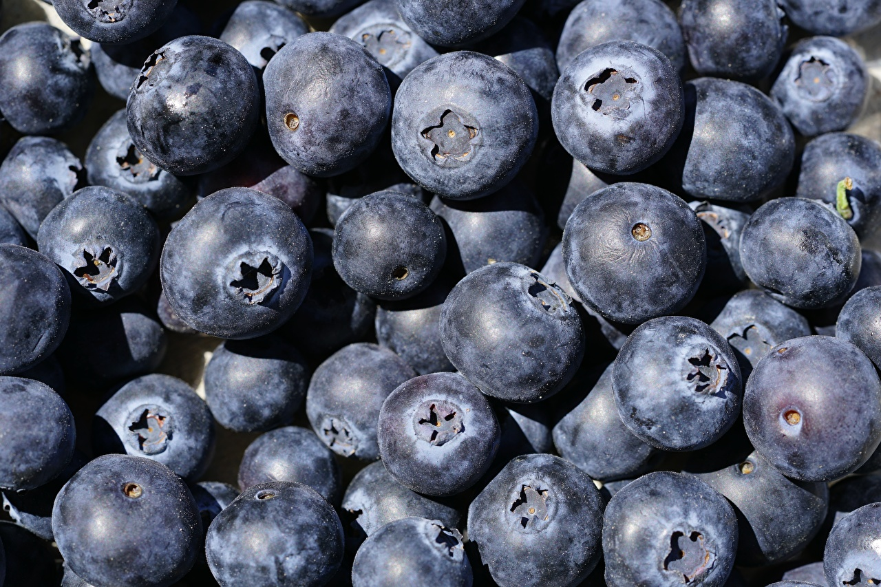 Photos Blueberries Food Berry Many Closeup
