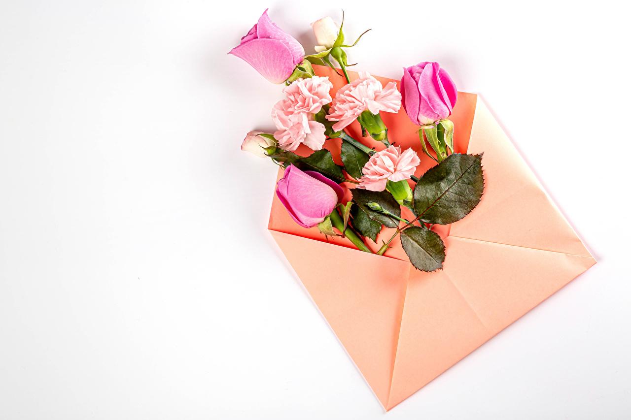 Bilde Konvolutt rosa Nelliker Blomster Gratulasjonskort Mal Hvit bakgrunn Roser blomst nellikslekta