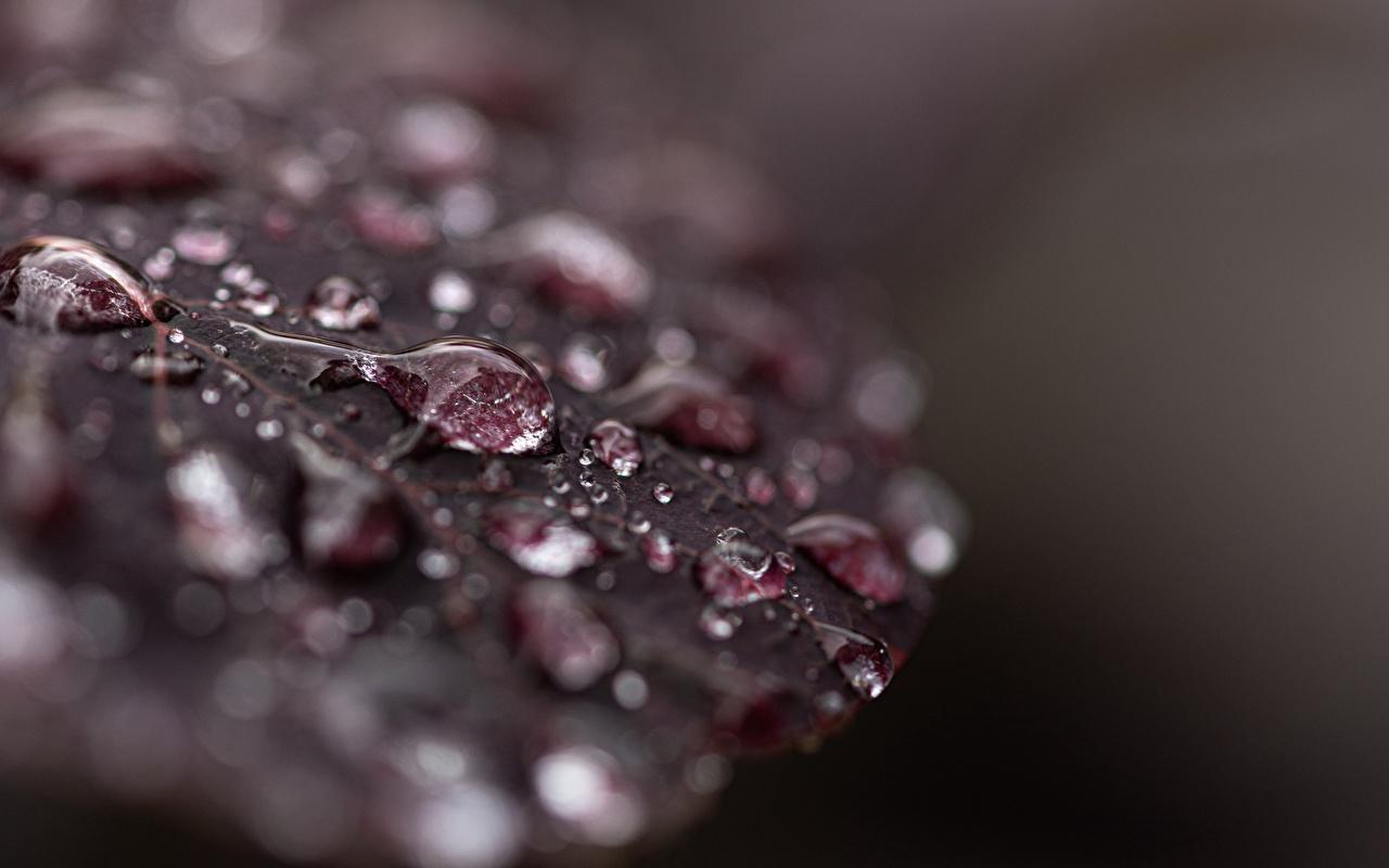 Bilder von Blattwerk Natur Tropfen Makrofotografie Großansicht Blatt Makro hautnah Nahaufnahme