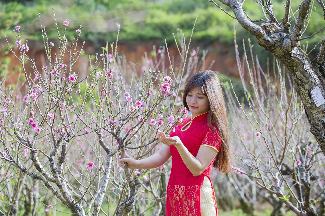 Fotos Braune Haare Mädchens Frühling Garten Asiatische Ast Blühende Bäume Braunhaarige