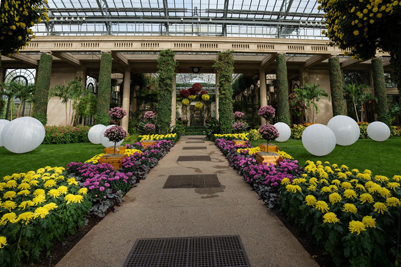Pictures USA Longwood Gardens Nature Chrysanthemums Balls Design Mums Chrysanths