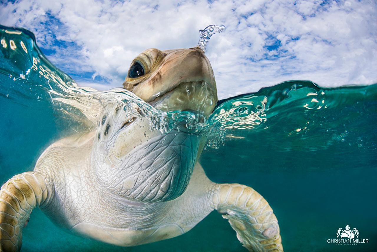 Wallpaper Animals Turtles Macro Water Head Closeup swimming animal Macro photography swim Swims