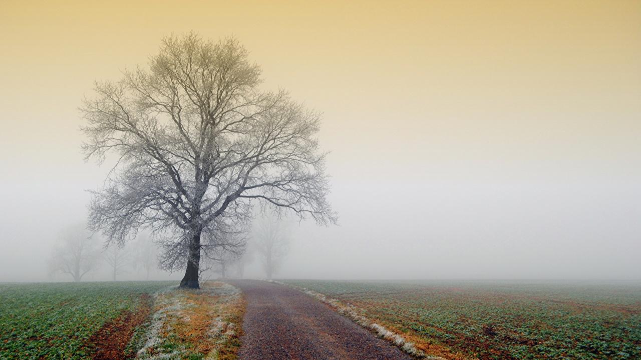 Wallpaper Fog Nature Roads Fields Trees