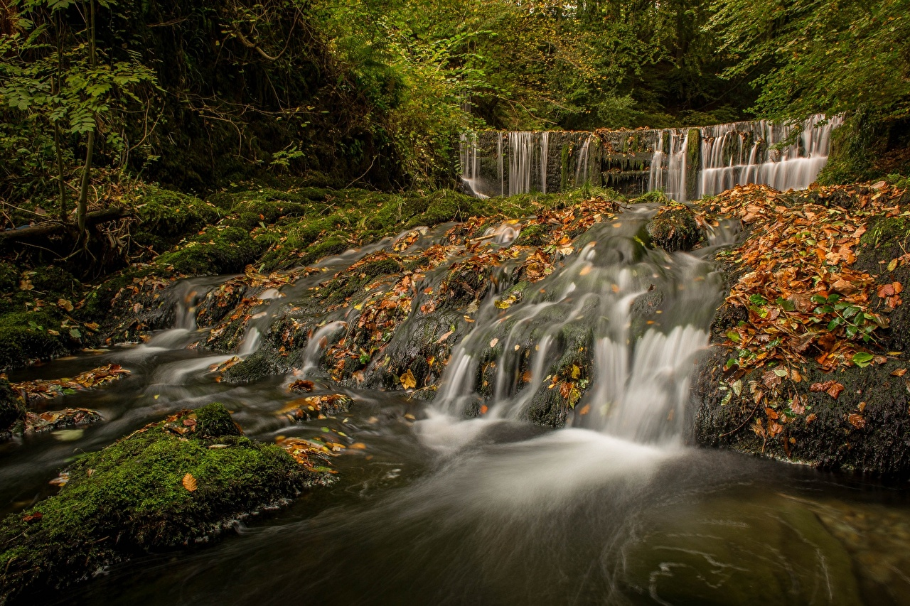 Picture Foliage England Lake District  Cumbria Autumn Nature