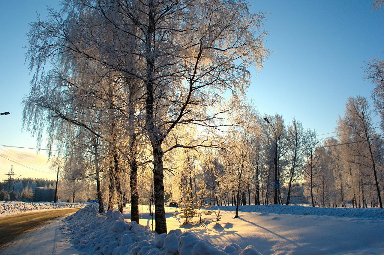 Achtergronden bureaublad Winter Natuur Wegen Sneeuw Bomen Seizoen weg Een boom