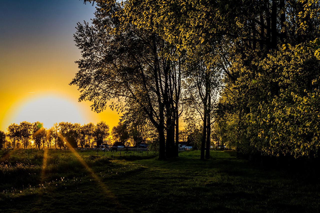 Foto Lichtstrahl Natur Sonne Sonnenaufgänge und Sonnenuntergänge Gras Bäume