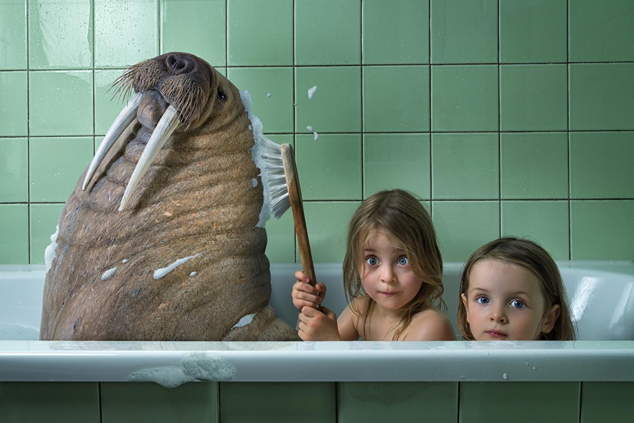 Foto Humor Kleine Mädchen Walross Eckzahn Badezimmer kind Zwei