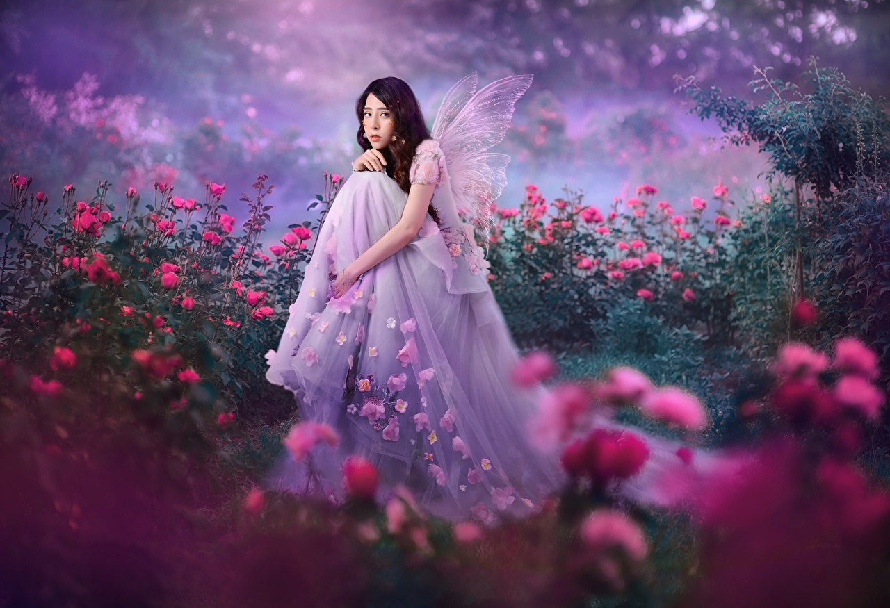 Picture Fairies Roses female Fantasy Asiatic Sitting frock Fairy rose Girls young woman Asian sit gown Dress