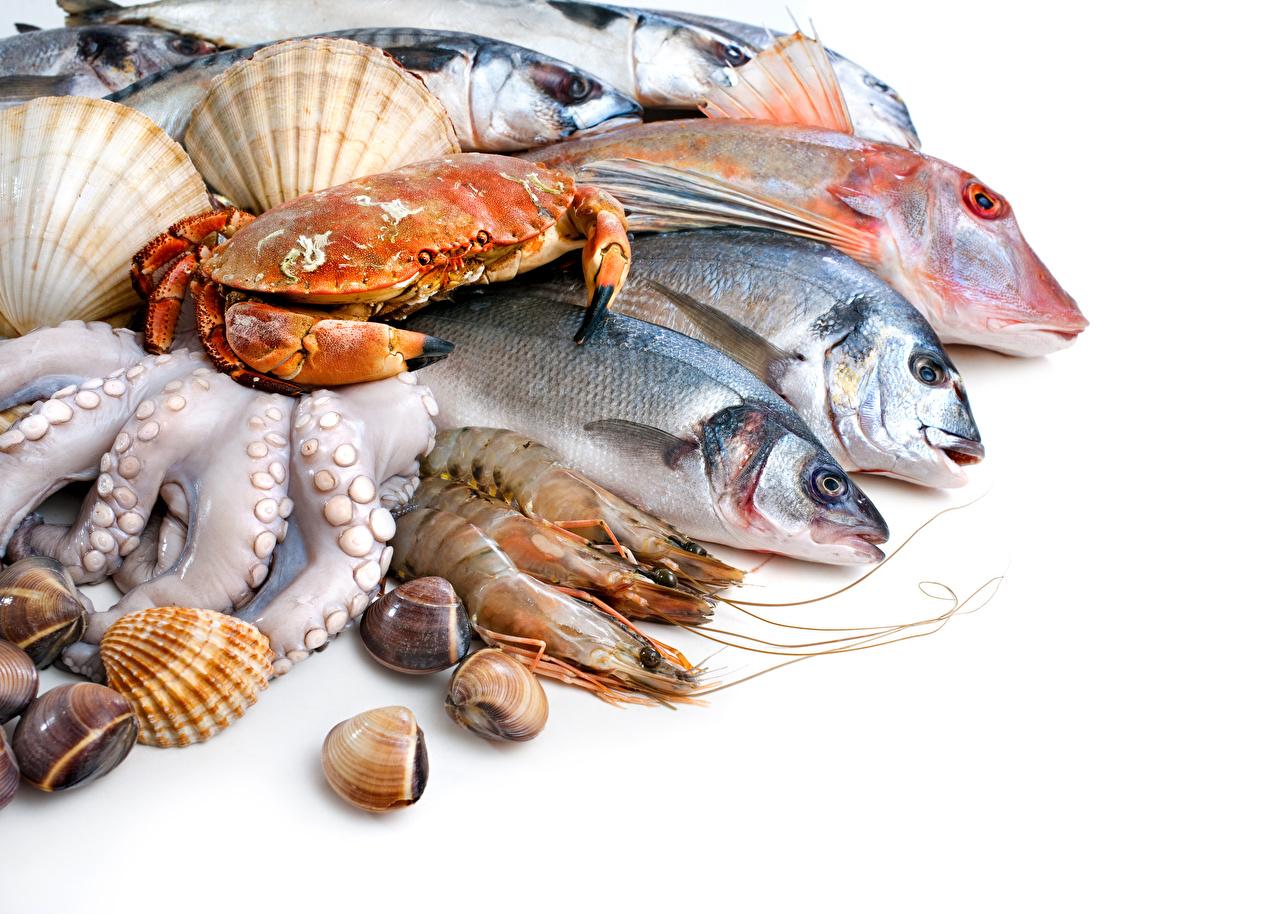 Bakgrundsbilder Räkor Krabbor Fisk - Mat Mat Skaldjur Vit bakgrund fiskar krabba