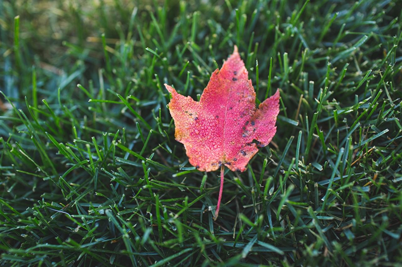 、クローズアップ、秋、草、木の葉、自然、