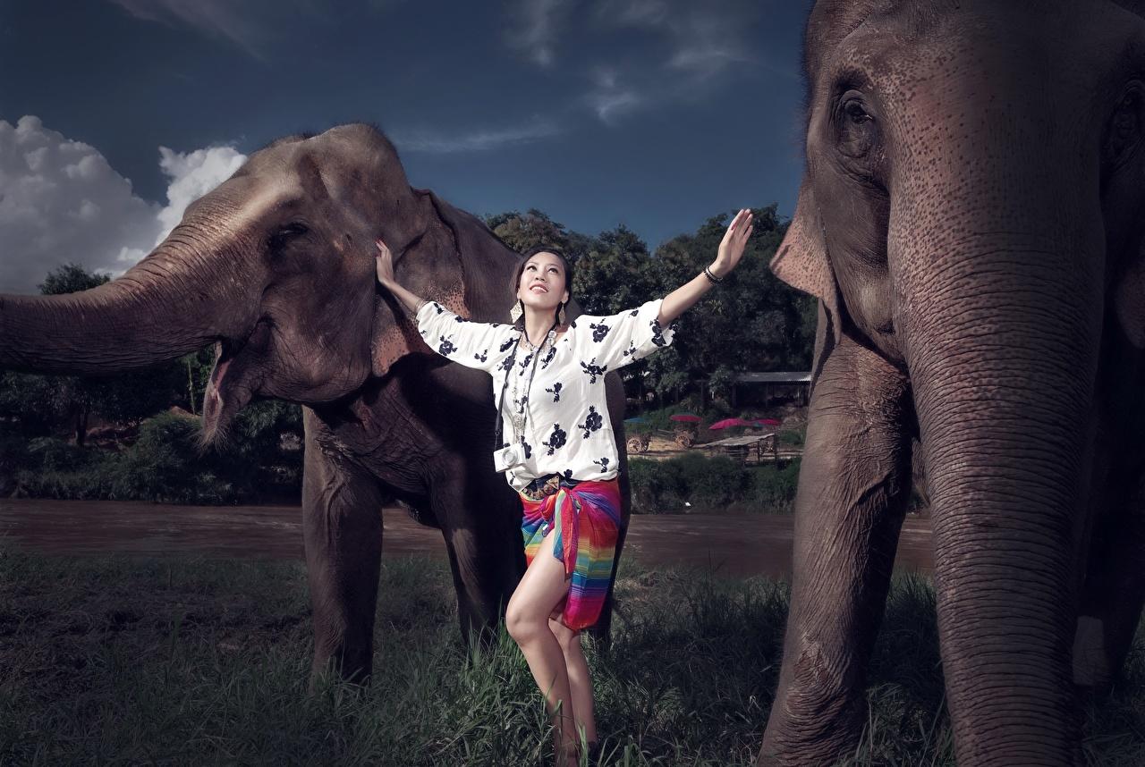 Photo elephant female Asiatic animal Elephants Girls young woman Asian Animals
