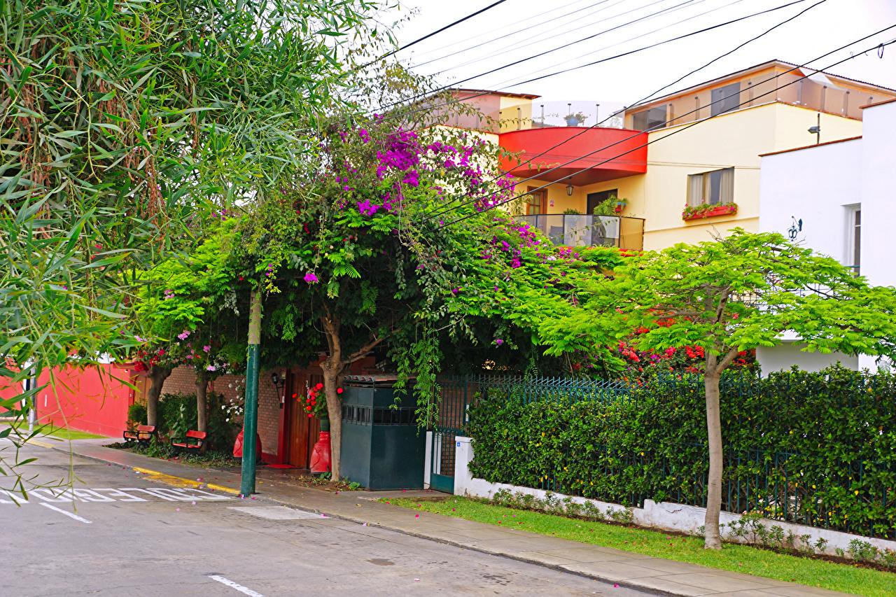 Photos Peru Lima Street Trees Cities Building Houses