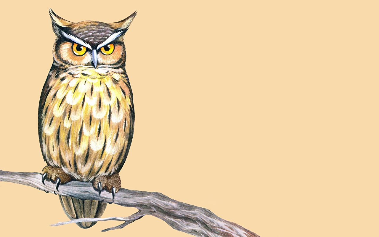 bilder eulen vögel ast ein tier gezeichnet