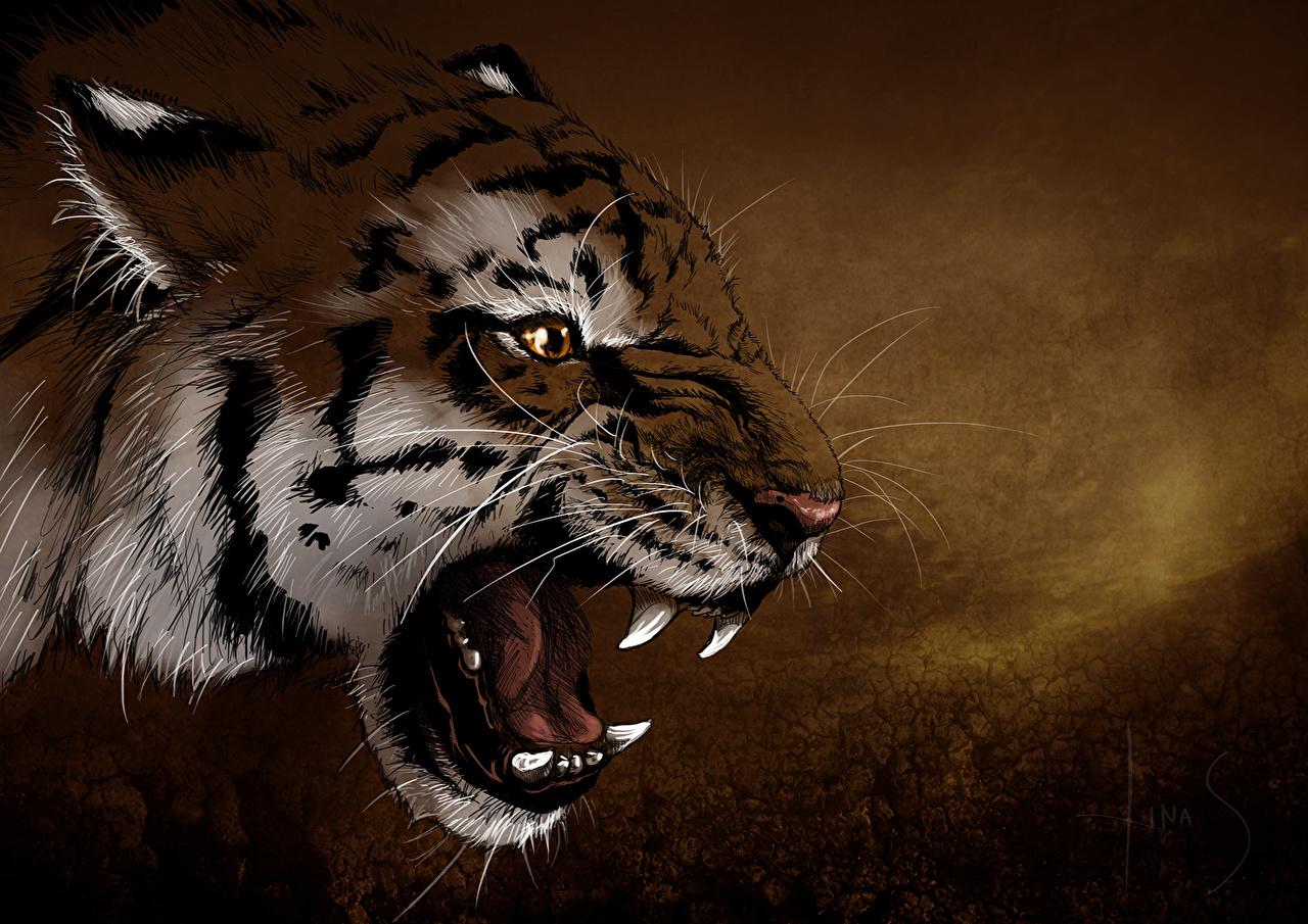 Фотографии Тигры Большие кошки Зубы рычит Усы Вибриссы Морда головы животное Рисованные тигр злой Оскал злость морды Голова Животные