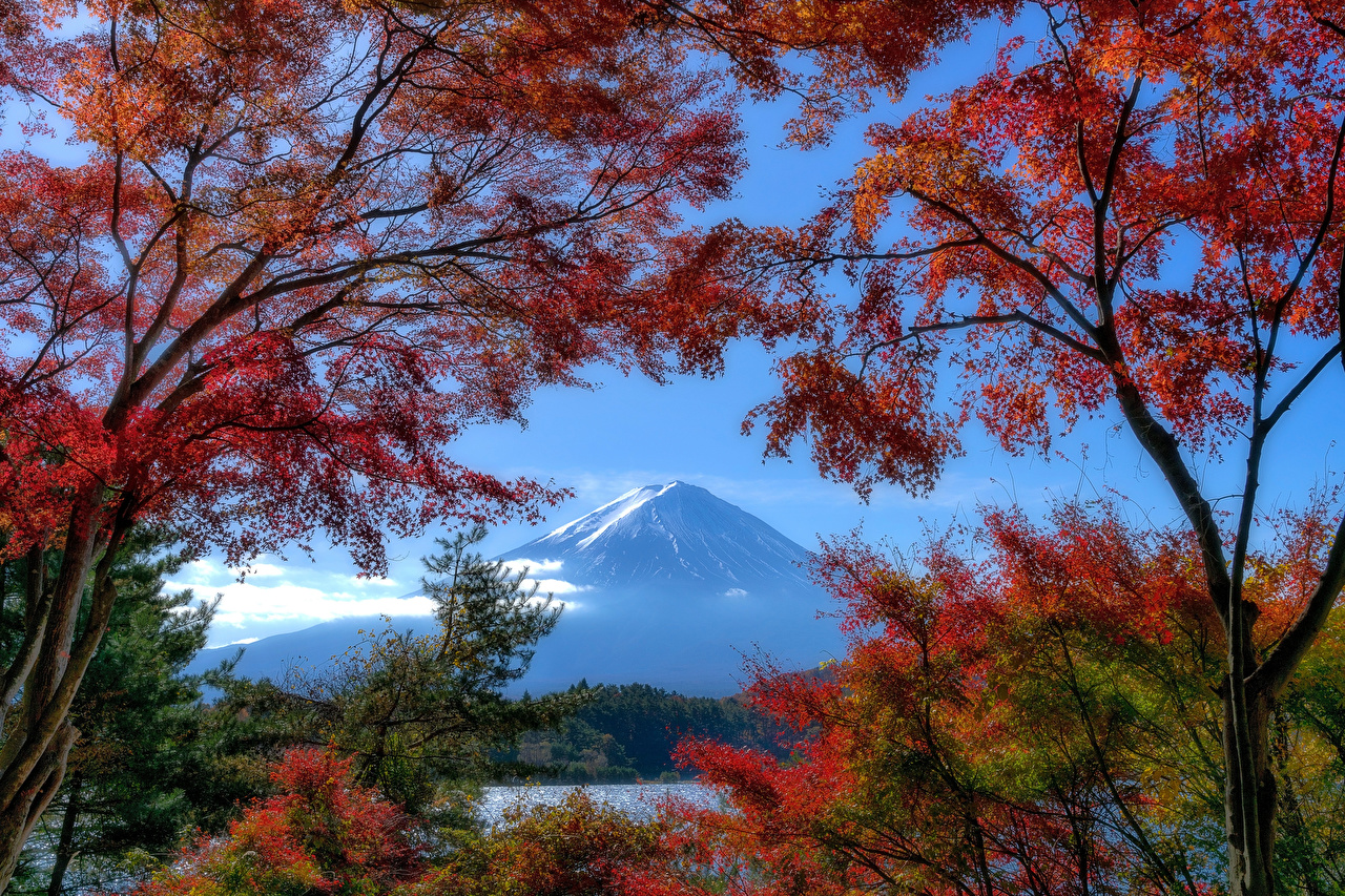 Image Mount Fuji Japan Nature Autumn Mountains Branches Trees mountain
