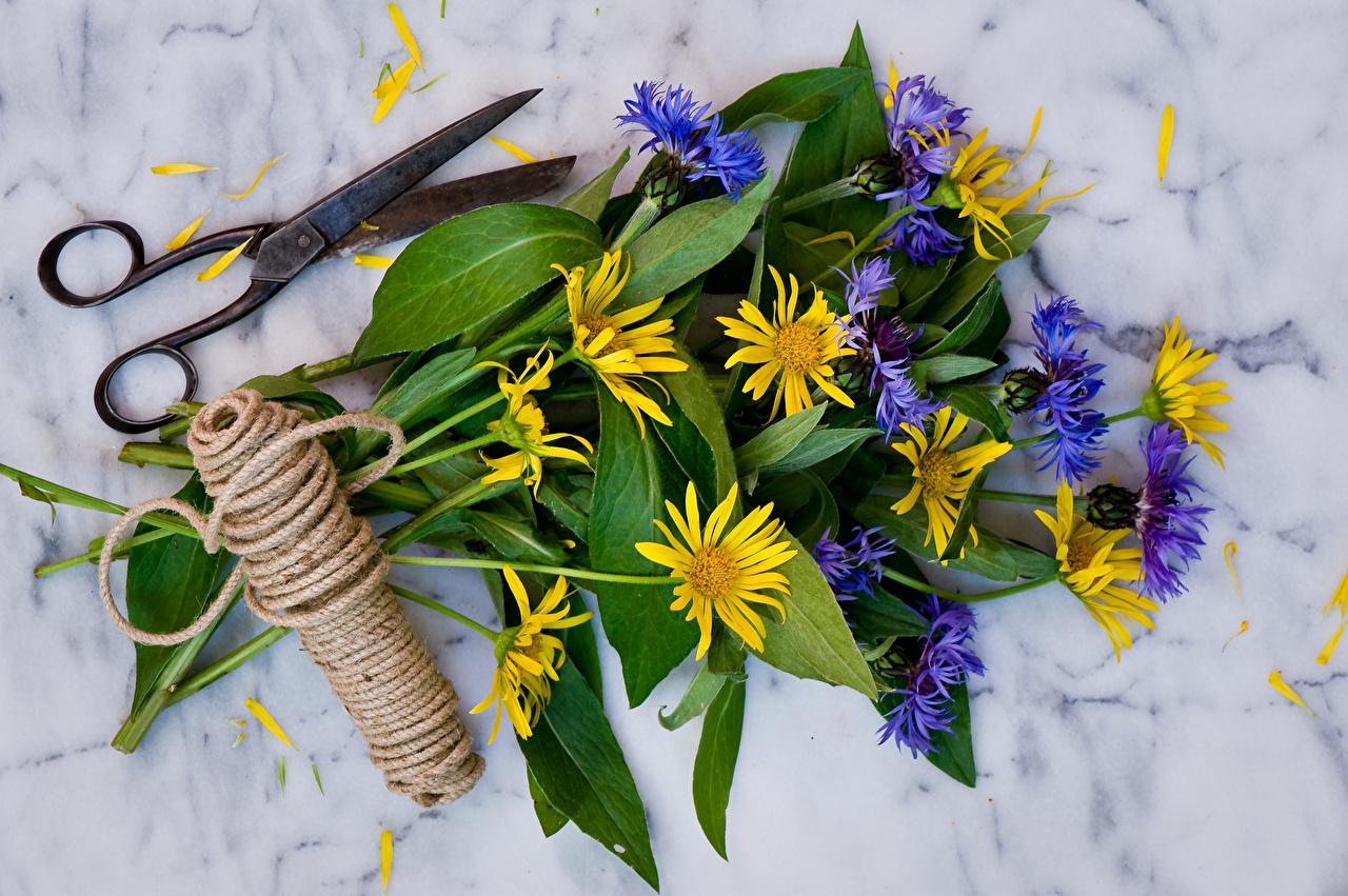 Picture doronicum Scissors Bouquets Petals flower Cornflowers bouquet Flowers Centaurea