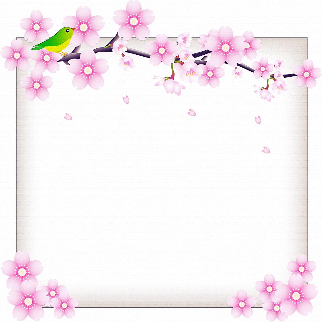 Photos bird Flowers Branches Template greeting card Flowering trees Birds flower