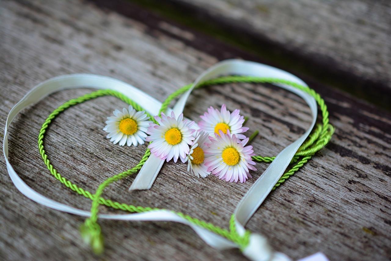Photo Valentine's Day Heart Bellis flower Ribbon Flowers