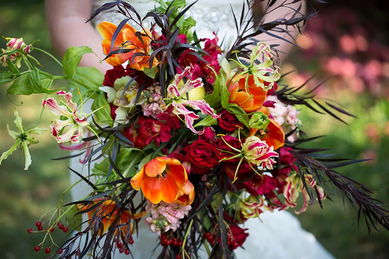 Bouquets Tulipes Roses Orchidées Alstroemeria fleur, tulipe, bouquet, rose, orchidée Fleurs