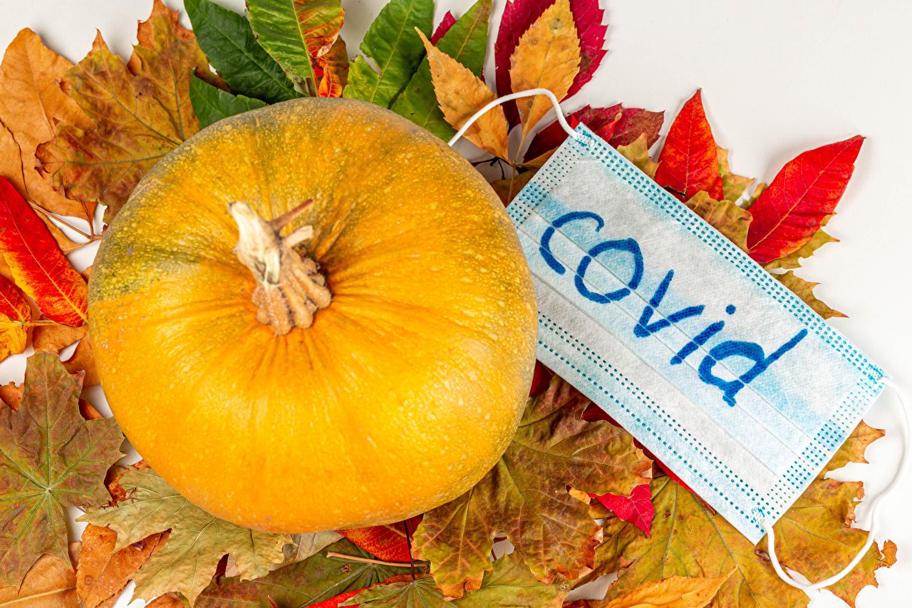 Foto Coronavirus Blatt Natur Herbst Kürbisse Masken Blattwerk Maske