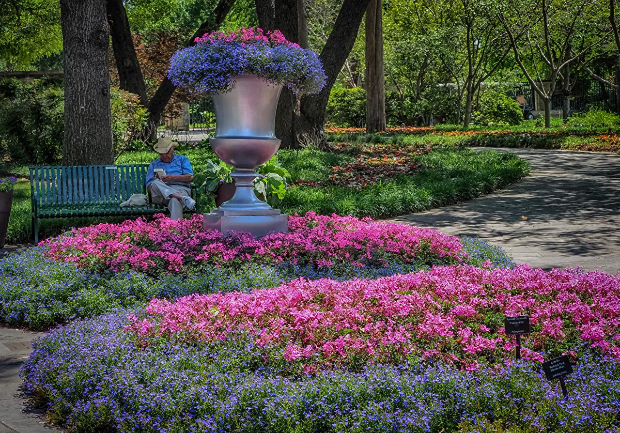 Foto Texas Vereinigte Staaten Dallas Arboretum Natur Park Storchschnäbel Design USA Geranien